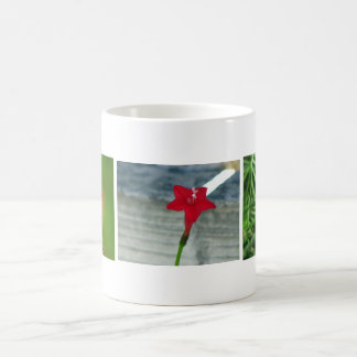 Rote Zypresse-Rebe Kaffeetasse