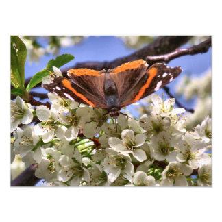 Roter Admirals-Schmetterling Kunst Photo
