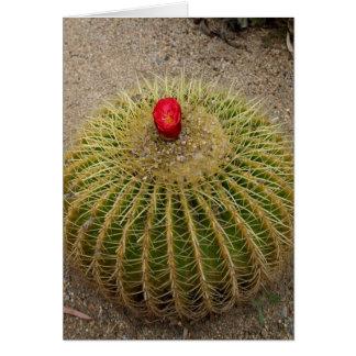 Roter blühender Kaktus Karte