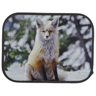 Roter Fox, der auf Schneebank, Vulpes, Mt. sitzt Automatte
