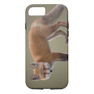 roter Fuchs, Vulpes Vulpes, entlang dem zentralen iPhone 8/7 Hülle