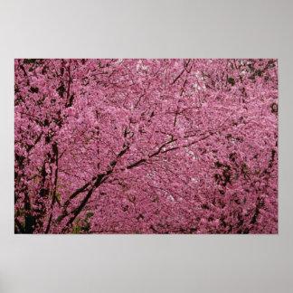 Roter heller Frühling blüht auf blühenden Poster