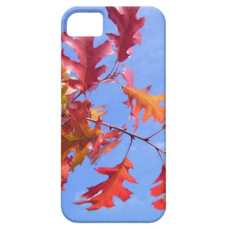 ROTER HERBST iPhone 5 ETUIS