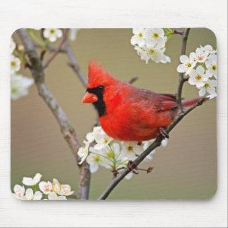 Roter Kardinal Mousepad