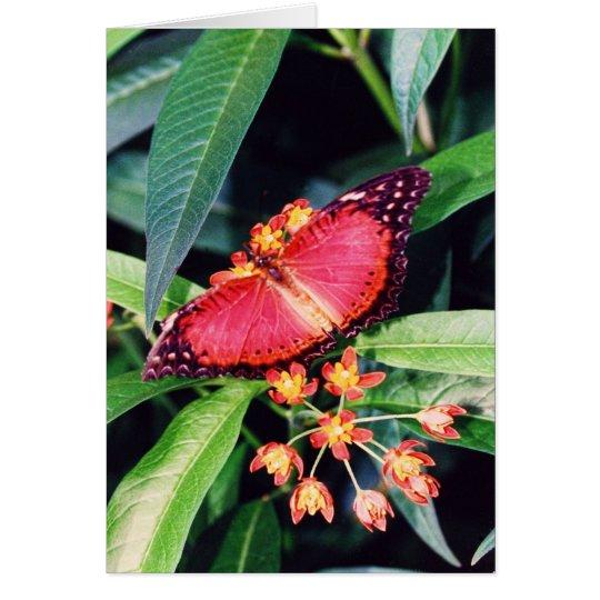 Roter Lacewing-Schmetterling Grußkarte