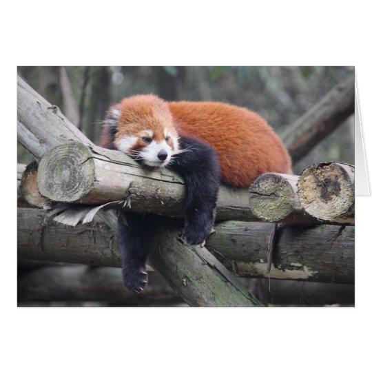 Roter Panda Grußkarte
