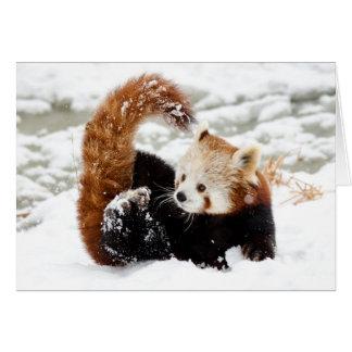 Roter Panda-Schnee Karte