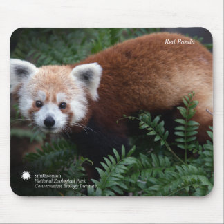 Roter Panda Smithsonian | Mauspad