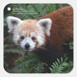 Roter Panda Smithsonian | Quadratischer Aufkleber