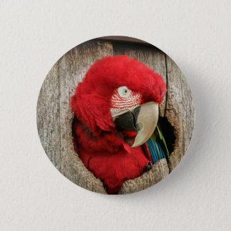 Roter Papagei grünen Macaw Flügel des Abzeichens Runder Button 5,1 Cm