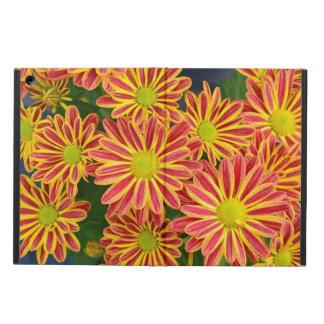 Roter und gelber Chrysantheme-Blumen ipad