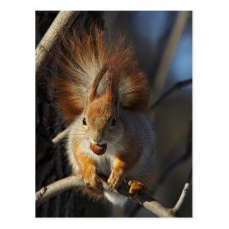 Rotes Eichhörnchen mit einer Haselnuss Postkarte