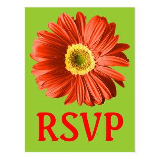Rotes Gänseblümchen-Blumen-UAWG oder Gewohnheit Postkarte