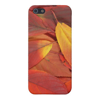 Rotes Herbst-Blätter auf Iphone Fall iPhone 5 Hülle