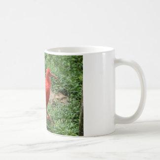 Rotes IBIS Kaffeetasse