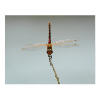 rotes Libelle Stillwater Schutzgebiet Fallon, Postkarte