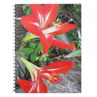 Rotes Lilien-Spirale-Foto-Notizbuch Notizblock