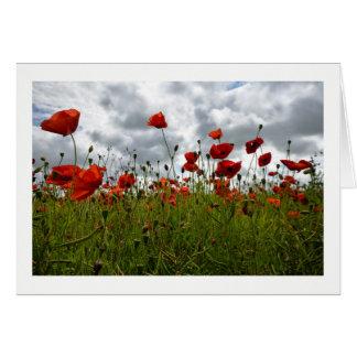 Rotes Mohnblumen-Feld, Dorset Karte