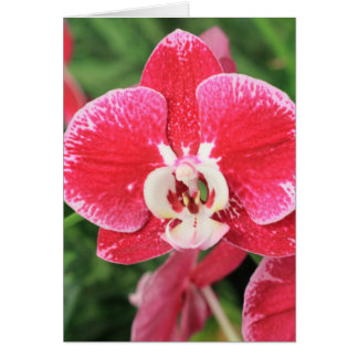 Rotes Orchidee bloosom Karte