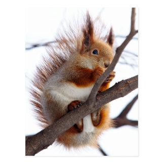Rotes Pelzeichhörnchen mit einer Haselnuss Postkarte