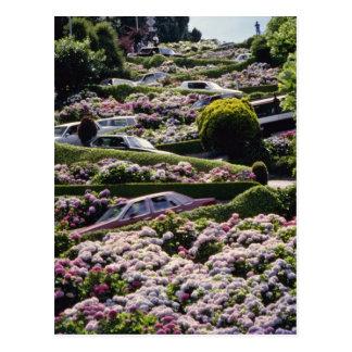 Rotes San Francisco, Kalifornien Blumen Postkarte