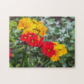 Rotes und gelbes Primel-Fotopuzzlespiel