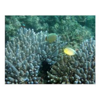 RotflosserButterflyfish (Chaetodon lunulatus) Postkarte
