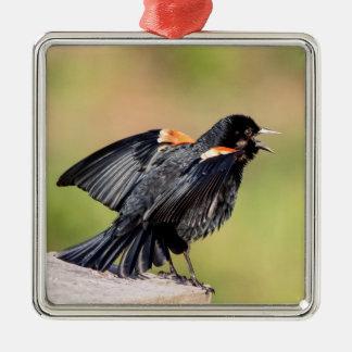 Rotgeflügelte singende Amsel Quadratisches Silberfarbenes Ornament