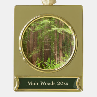 Rotholz-Bäume am Muir Holz-nationalen Monument Banner-Ornament Gold