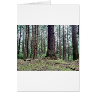 Rotholz-Bäume Karte