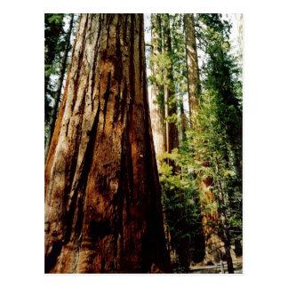 Rothölzer in Yosemite Postkarte