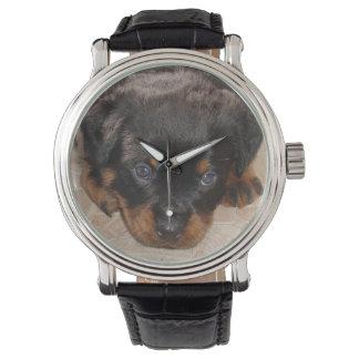 Rottweiler Welpe, der sich niedrig duckt Armbanduhr