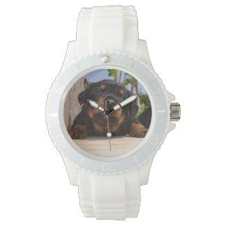 Rottweiler Welpe, der versucht zu klettern Uhr
