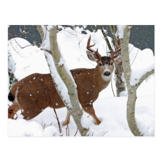 Rotwild-Dollar im Schnee im Winter Postkarte