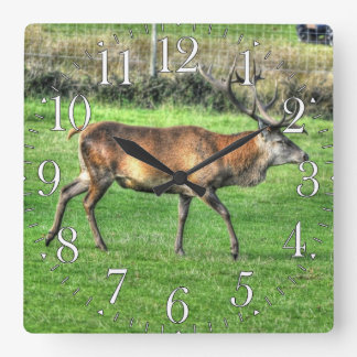 Rotwild-Hirsch Burley Manor-Anwesen, Hampshire, Quadratische Wanduhr