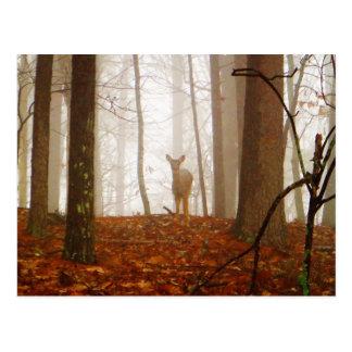 Rotwild im Nebel Postkarte