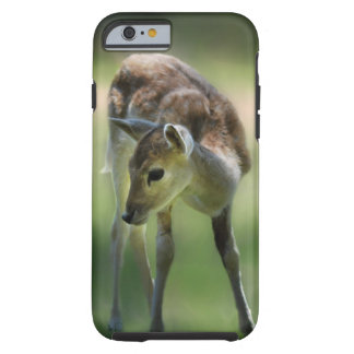 Rotwild sind so süß tough iPhone 6 hülle