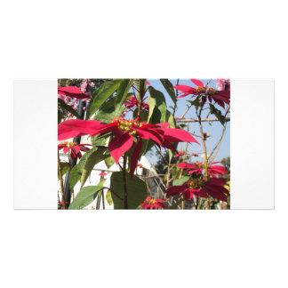 rougeur partout cartes de vœux avec photo