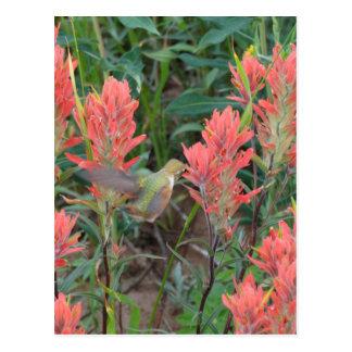 Rubin im roten Blumen-Kolibri Postkarte