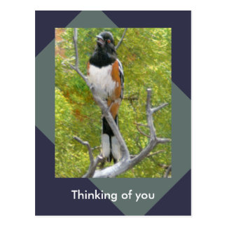 Rufous-Mit Seiten versehene Towhee-Natur-Postkarte Postkarte
