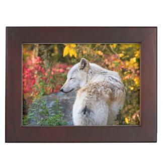 Ruhiger Herbst-Wolf Erinnerungsdose