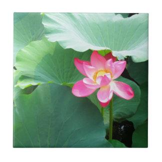 Ruhiges Lotus Kleine Quadratische Fliese