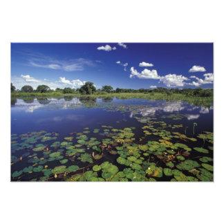S.A., Brasilien, Wasserstraßen in Pantanal Photo Druck