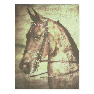 Saddlebred Pferd Postkarte