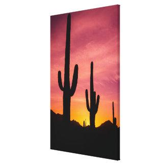 Saguarokaktus am Sonnenaufgang, Arizona Leinwanddruck
