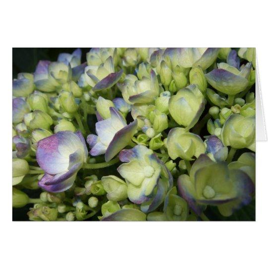 Sahne- u. lila Hydrangea Grußkarte