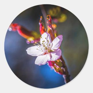 Sakura - fleur japonaise de cerise sticker rond