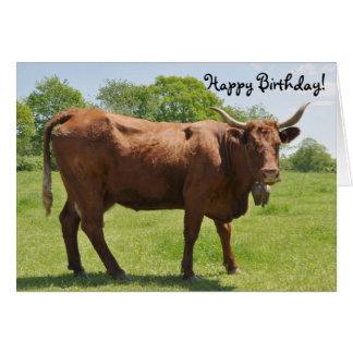 Salers Kuh-Geburtstagskarte Grußkarte