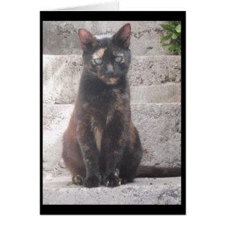 Samantha die Bush-Katze Karte