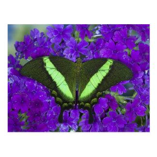 Sammamish, tropischer Schmetterling 4 Washingtons Postkarte